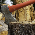 Tree Pruning Services –Understanding Some Crucial Aspects