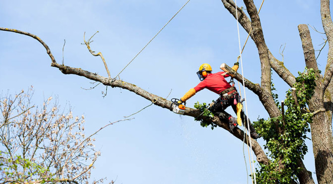 What are the necessities of Tree Removal Contractors?
