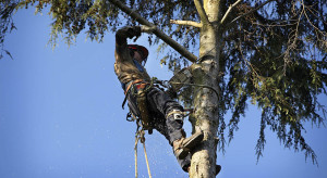 Why Hire a Tree Removal Service