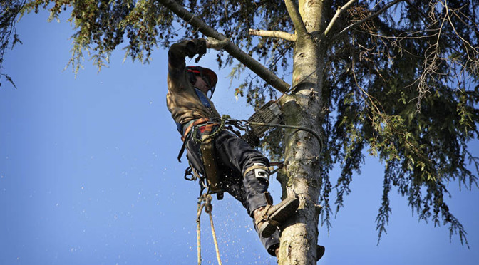 How to handle tree cutting safely and efficiently?